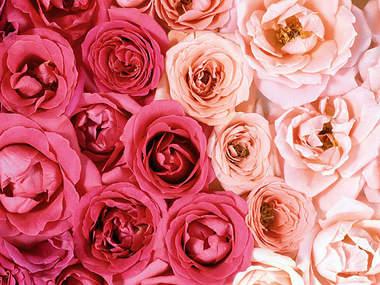 Уход за саженцами роз Greensad