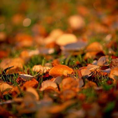 Как развеселить себя в унылую осеннюю пору