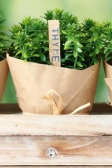Овощи для выращивания в горшках